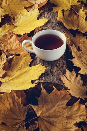 Mug of tea, autumn leaves, beautiful autumn composition with teacup. autumn forest, tea time. Concept of fall season.