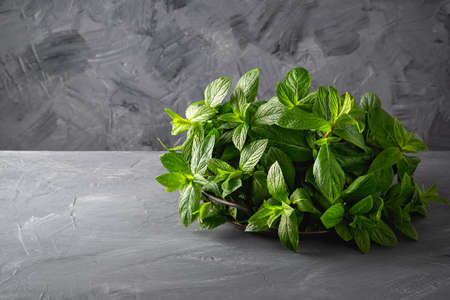 Fresh mint on a metal tray on a gray background. Copy space for text Stock Photo
