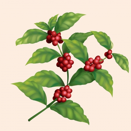green coffee beans: icon coffee tree branch with berries