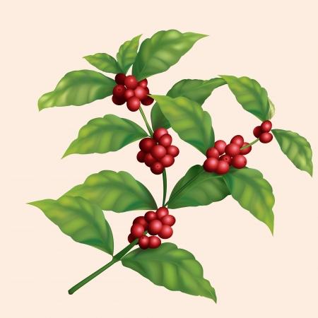 planta de cafe: icono de café rama de árbol con bayas Vectores