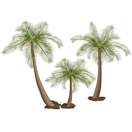 palm bomen met groene bladeren en stenen