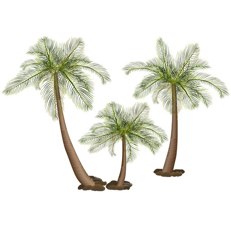 palm trees with green leaves and stones Illustration