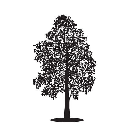 poplar: silhouette detached tree birch with leaves on a white background Illustration