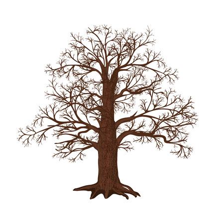 白い背景の上の葉のない独立した樫の木