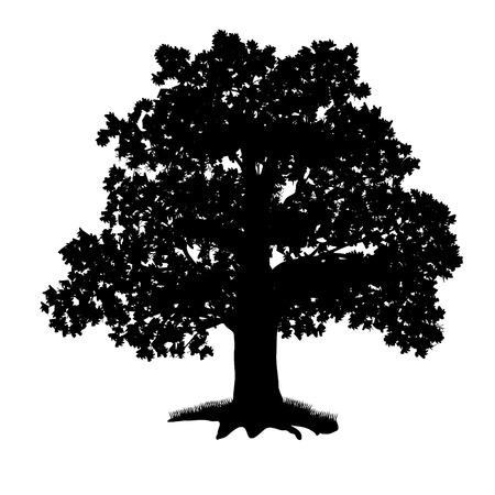 白い背景の上の葉を持つ樫の木のシルエット