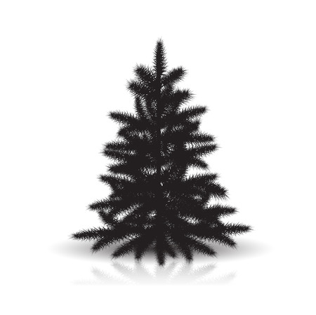spruce silhouette with reflection and shadow on white background Illustration