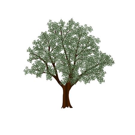 白い背景の上の緑の葉とオリーブの木