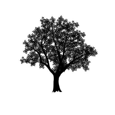 silhouette of the olive tree with leaves on a white background