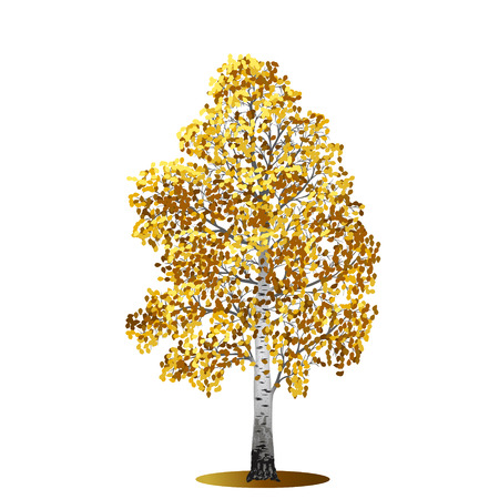 at yellow: detached tree birch with yellow leaves on a white background Illustration