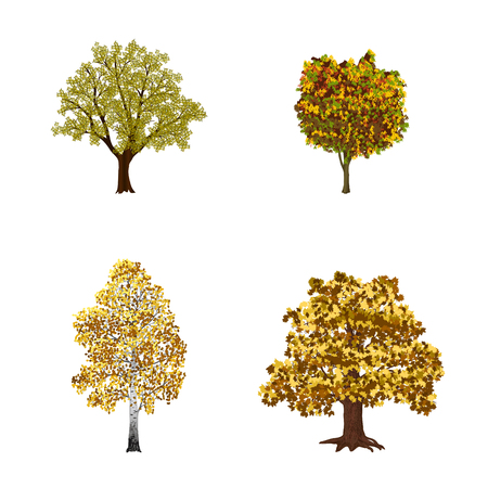 beech: set of trees with yellow leaves on a white background