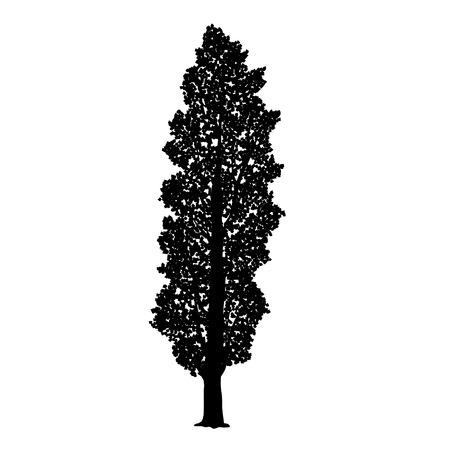silhouette staccato albero di pioppo con foglie su uno sfondo bianco Vettoriali