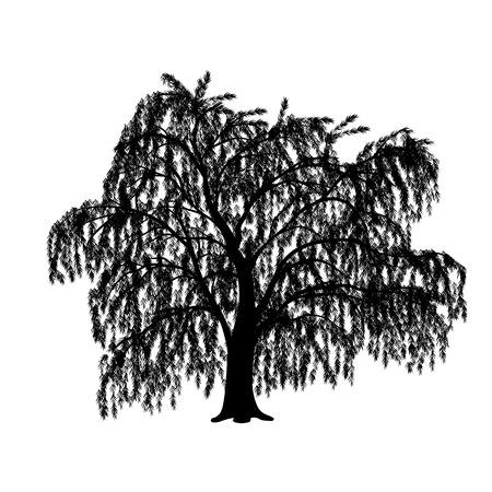silhouette détachée saule avec des feuilles sur un fond blanc