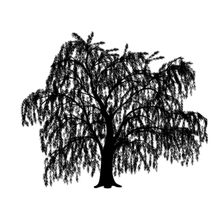full willow: silhouette detached tree willow with leaves on a white background