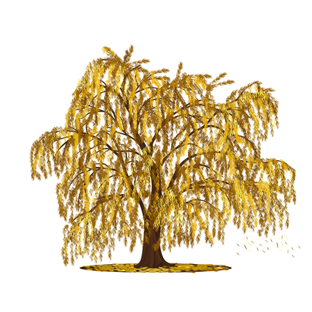 full willow: detached tree willow with yellow leaves on a white background
