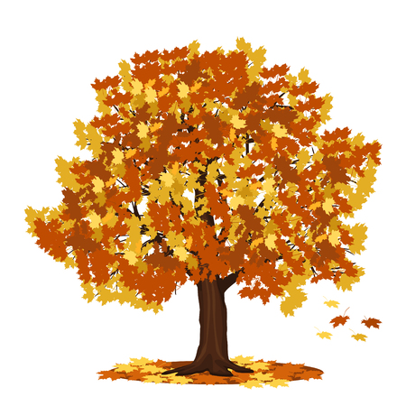 detached tree maple with red and yellow leaves on a white background Illustration