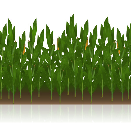 lawn with corn  on a white background