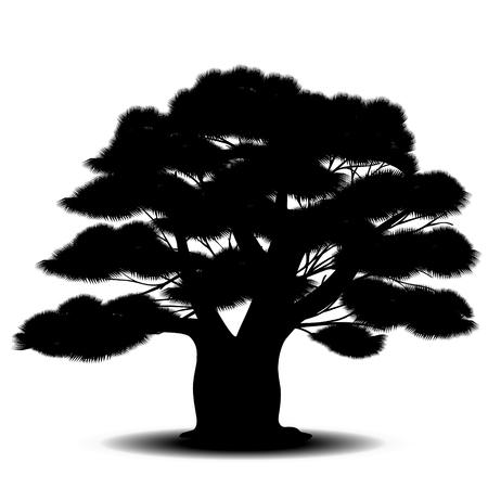 silueta del árbol de cedro con agujas de color verde sobre un fondo blanco