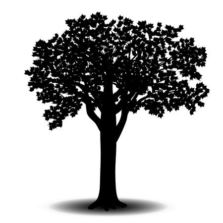 sicomoro: silhouette detached tree sycamore with leaves on a white background