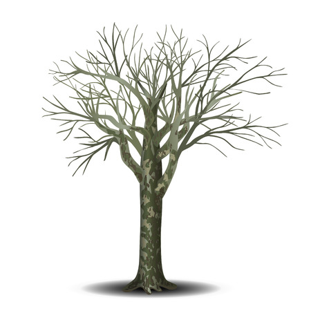 detached tree sycamore without leaves on a white background Illustration
