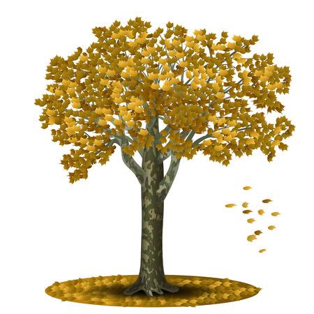 sicomoro: distaccato sicomoro con le foglie gialle su sfondo bianco Vettoriali