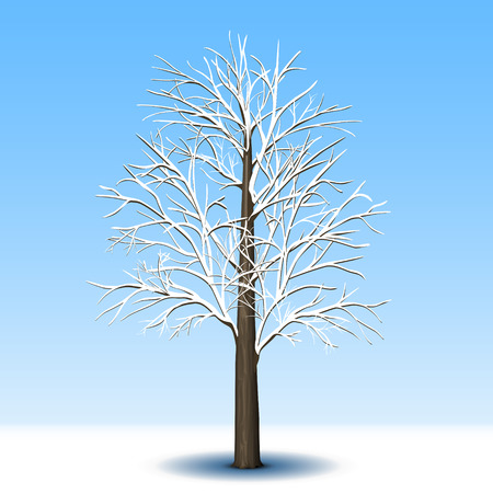 tree leaves: detached tree without leaves in frost with shadow