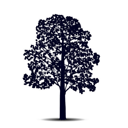 tree: silhouette detached tree  linden with leaves on a white background
