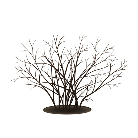 bush with shadow without leaves on white background