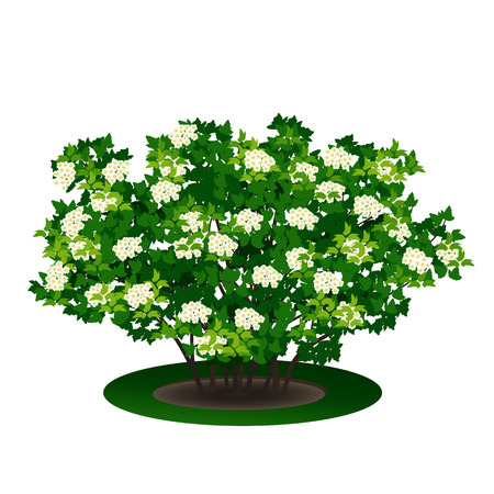 bush with green leaves and flowers on white background