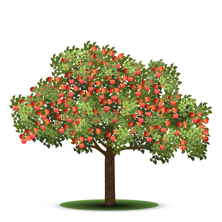 apple tree with red fruits on a white background Illustration