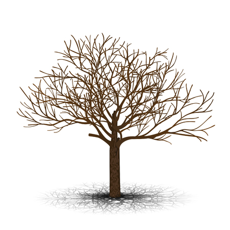 detached tree maple without leaves on a white background