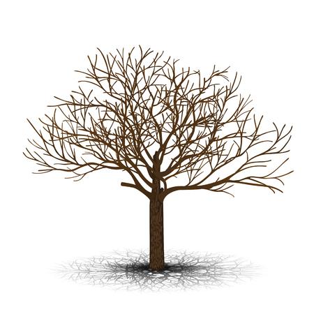 vrijstaande boom esdoorn zonder bladeren op een witte achtergrond Stock Illustratie