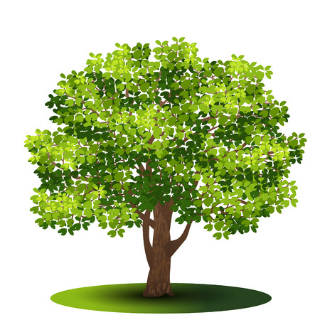 detached tree with green leaves on a white background Illustration