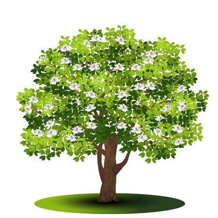 Freistehende Baummagnolie mit grünen Blättern und Blumen auf einem weißen Hintergrund. Vektorgrafik