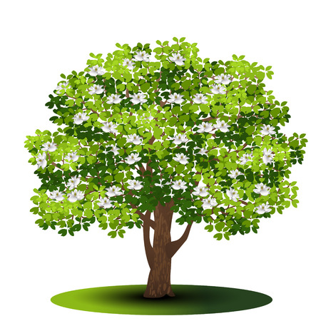 Detached tree magnolia with green leaves and flowers on a white background. Illustration