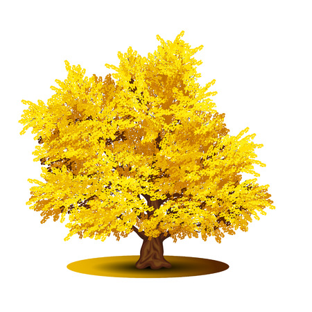 detached tree with yellow leaves on a white background