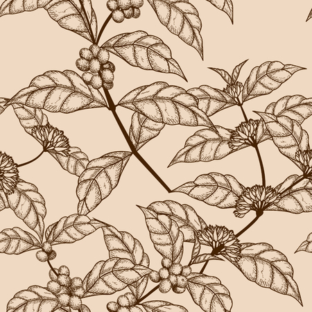 seamless pattern sketch coffee tree branch with berries on a light background Banco de Imagens - 122837596