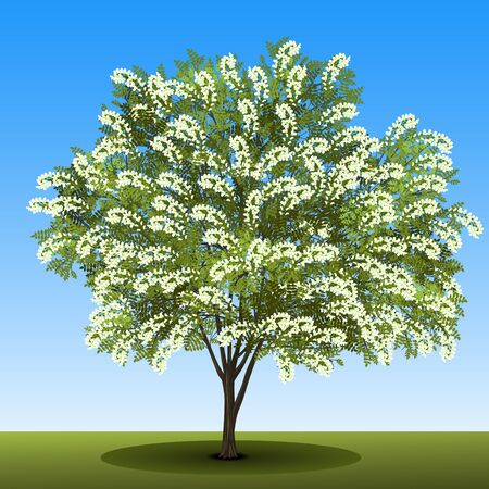 detached tree birch with with green leaves and white flowers on a blue background
