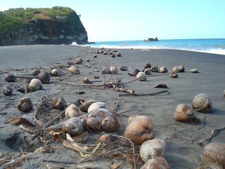 第 1 ビーチ、ハムステッド湾、ドミニカ国、カリブのビーチに散乱してココナッツ