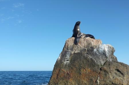 岩の上の海のライオンに近いエル アルコやカボ サン ルーカス バハカリフォルニアスル, メキシコ