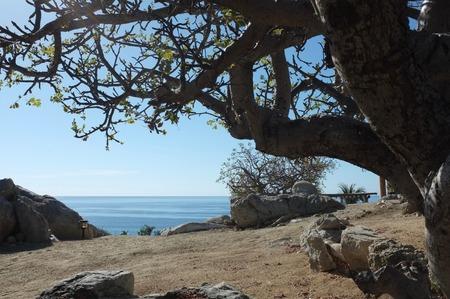 木々 や海、サン ホセ デル カボ, バハ カリフォルニア スル、メキシコの近くの岩