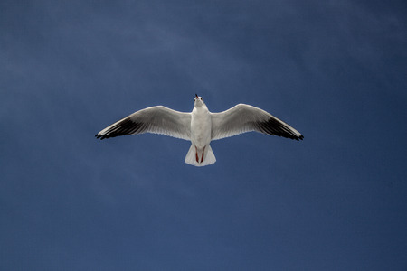 freak out: Seagull Stock Photo
