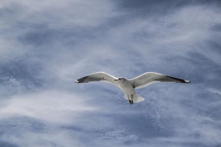percolate: Seagull Stock Photo