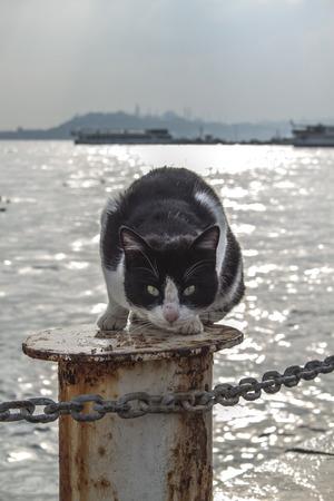 meatus: cat