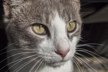 cubby: cat