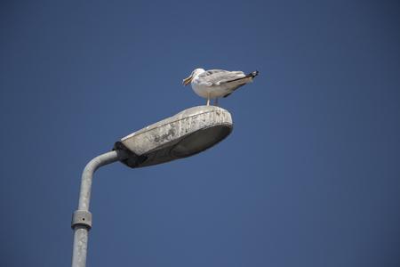 Lámpara de calle gaviota Foto de archivo - 77793992