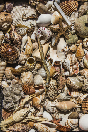 body scape: Sea Shell