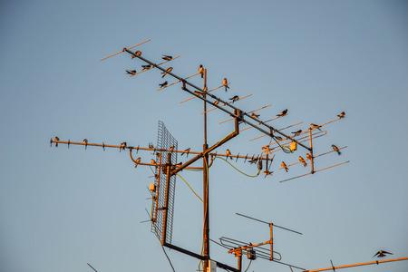 antennas: Birds on antennas