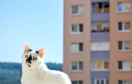 wide eyed: Suprised cat in city Stock Photo