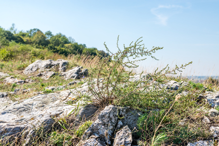 weed block: Some weed on top of rock hill in summer