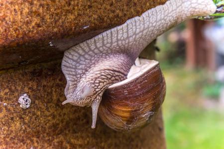 cabeza abajo: Caracol de jardín de diapositivas en el montante de jardín, al revés